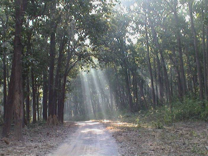 Related Pictures jim corbett national park uttranchal