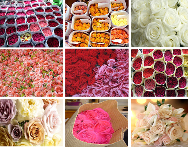 Roses used for Indian weddings