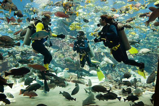 Honeymoon dive atlantis Dubai