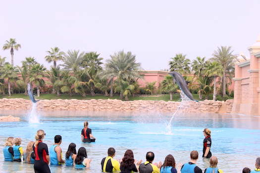 Dolphin Bay interaction at Atlantis Dubai