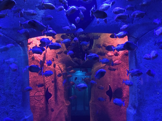 Lost Chambers Aquarium at Atlantis Dubai